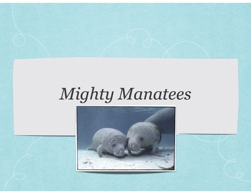 Mighty Manatee.